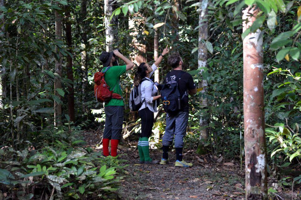 Auf den Spuren von Wildtieren bei einer Dschungelwanderung