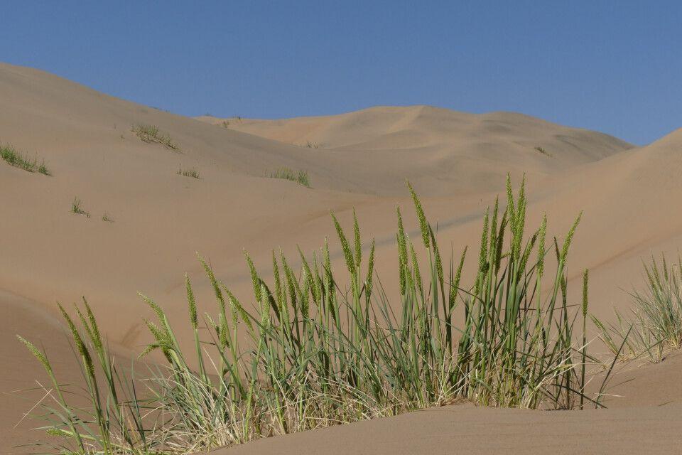 Sanddünen am Bajan See