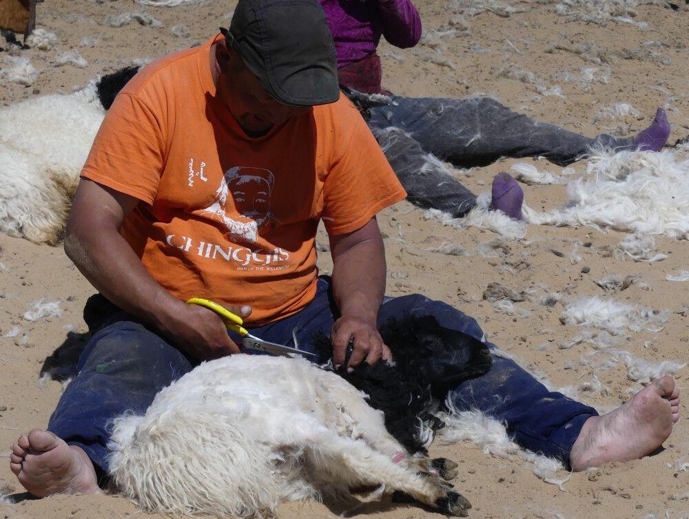 Die Nomaden am Schwarzen See beim Schafscheren