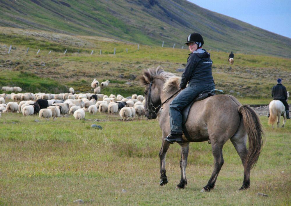 Beim traditionellen Schafabtrieb