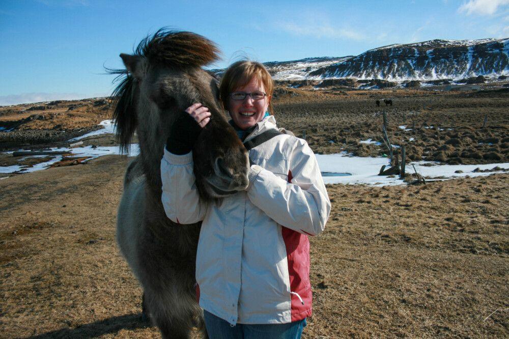 Verrückt nach Islandpferden