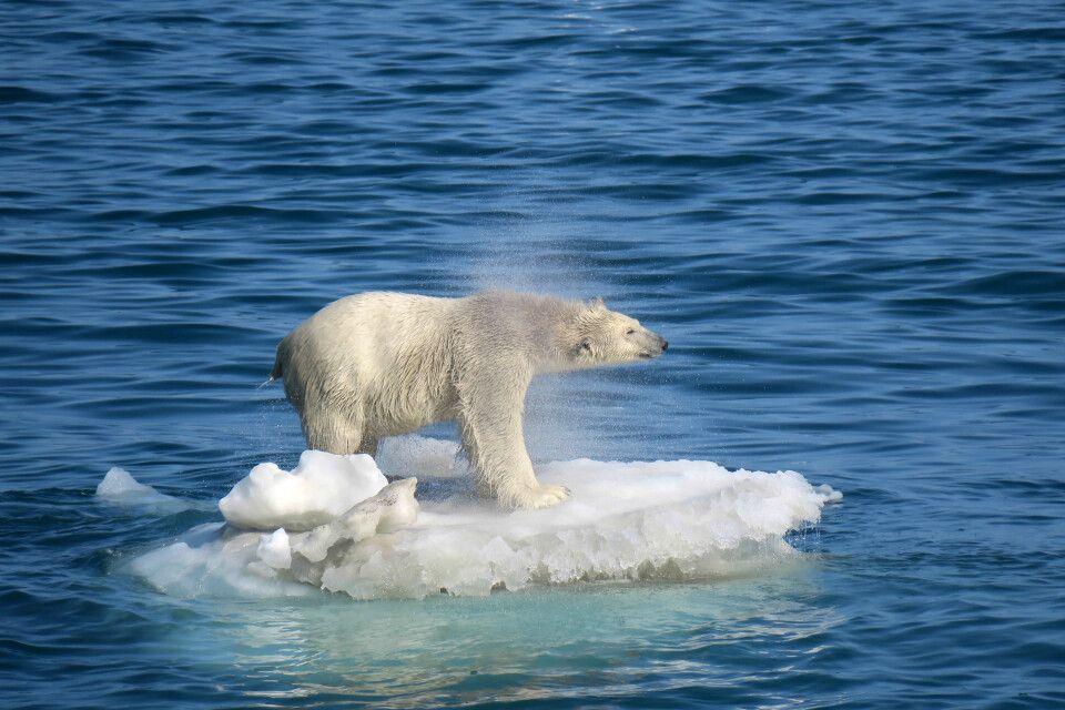 Nach dem Schwimmen muss das Wasser aus dem dicken Pelz