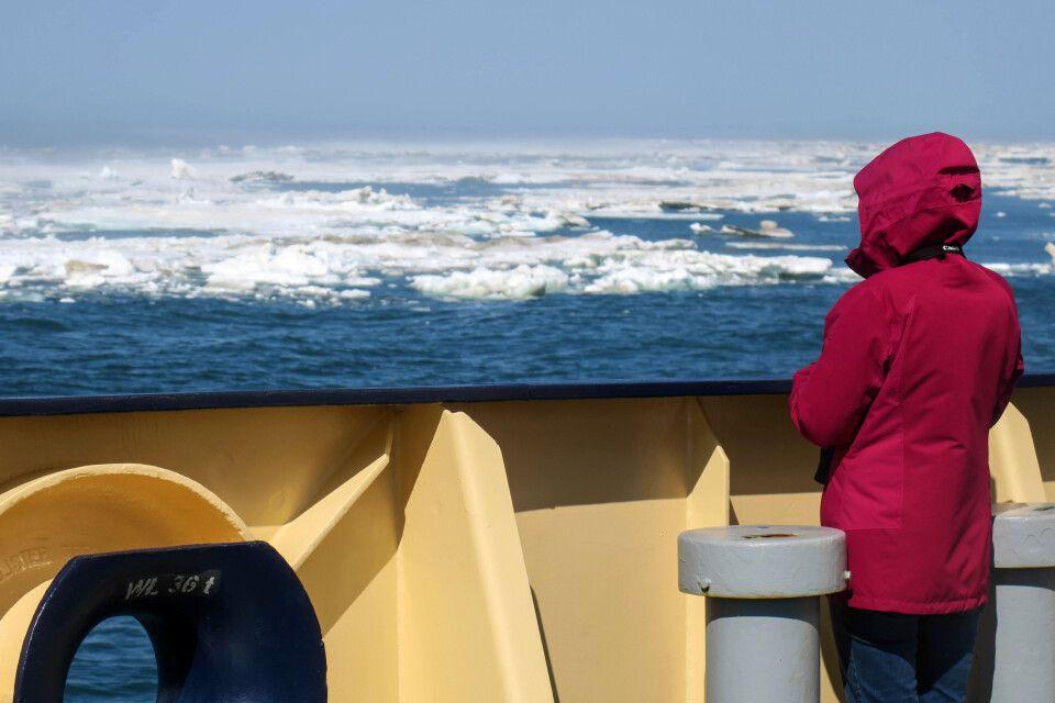 Stille Momente im noch recht offenen Meereis
