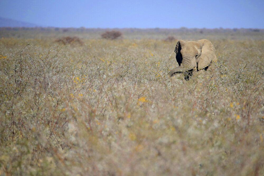 Elefant im Etosha NP