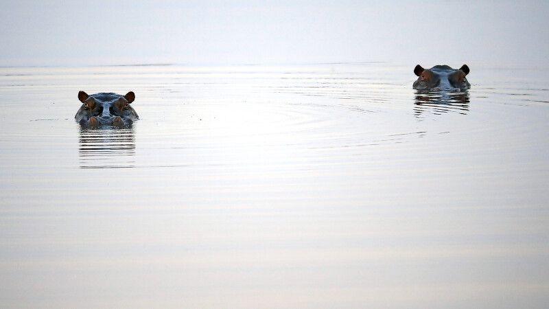 Hippos im Nkasa Rupara NP © Diamir