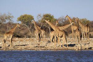 Etosha-Nationalpark