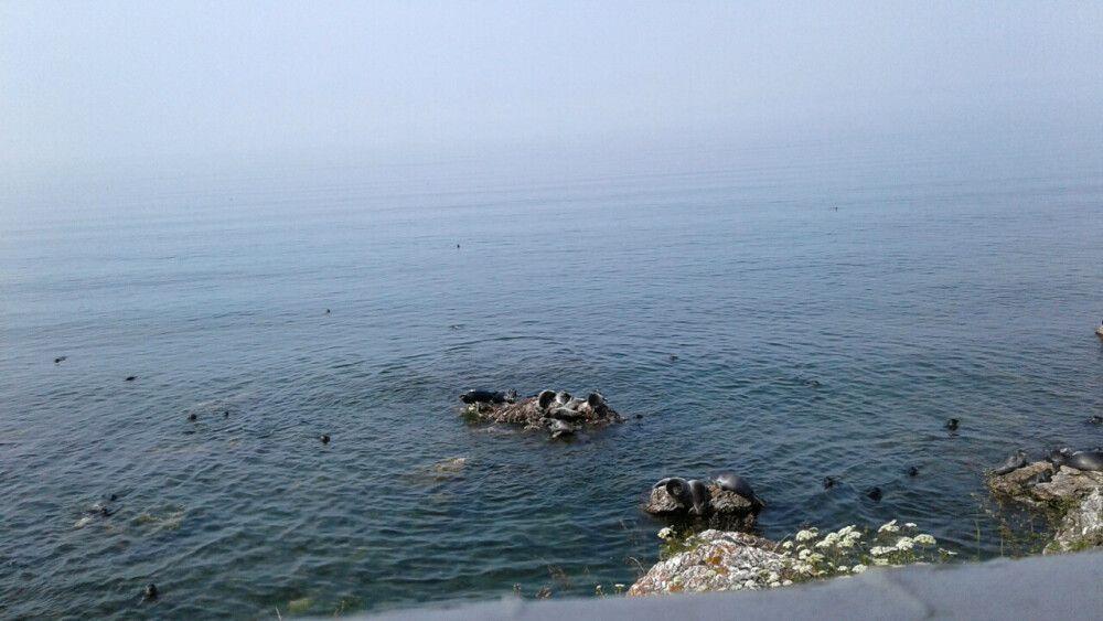 die Robben sonnen sich