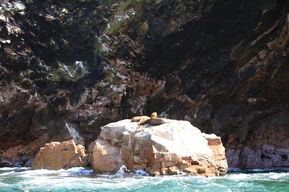 Robben suhlen sich auf den Islas Ballestas in der Sonne