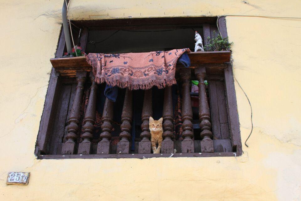 Begegnungen aller Art machen eine Reise durch Peru spannend. Hier eine Jungkatze in den Straßen von Lima
