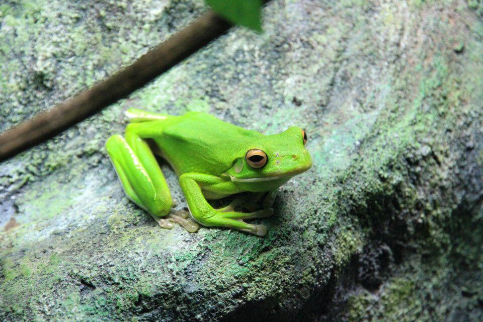Im Regenwald des Daintree-Nationalparks
