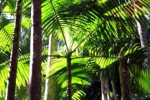 Regenwald im Daintree-Nationalpark