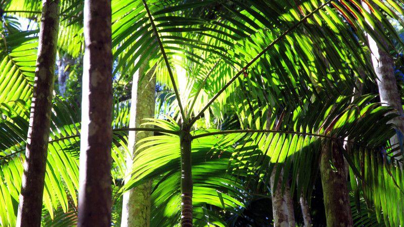 Regenwald im Daintree-Nationalpark © Diamir