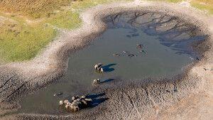 Wasserloch am Okavango aus dem Flugzeug
