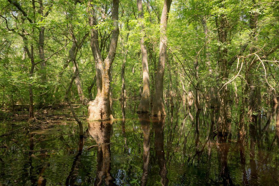 Sumpf im Letea-Wald, Donaudelta – Weltkulturerbe