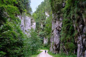 Hohe Felswände in der Zarnesti-Schlucht, Karpaten