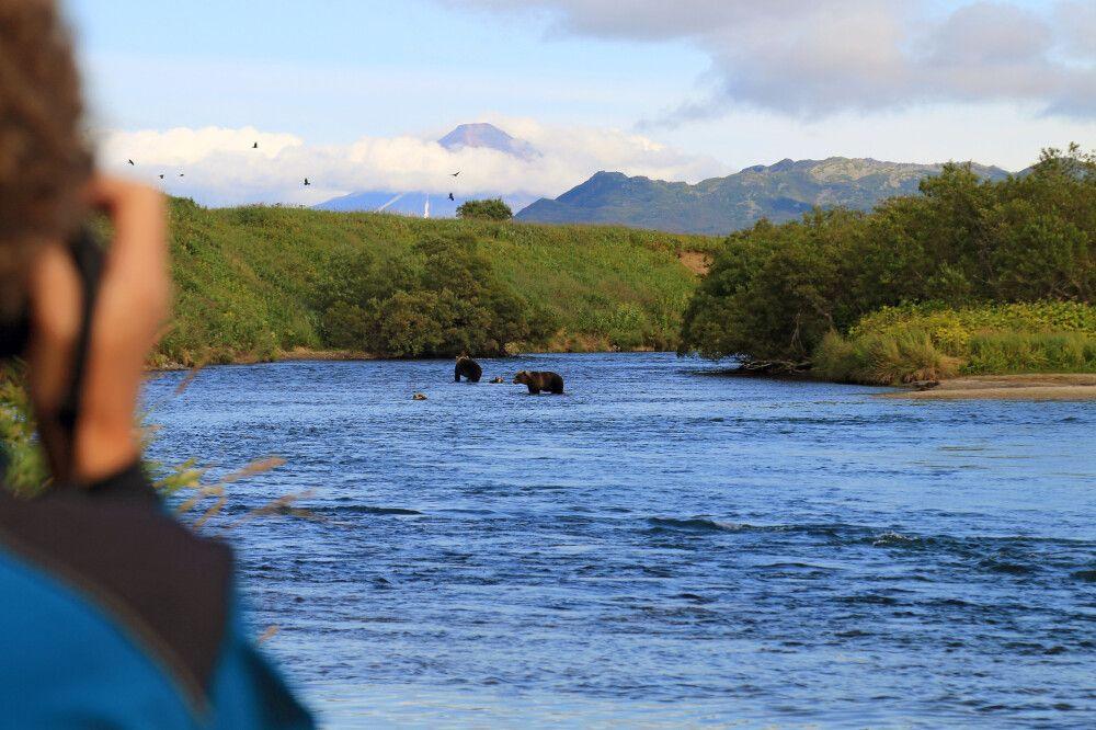 Bären beobachten im Fluß