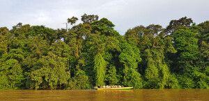 Der Kinabatangan bietet hervorragende Bootsafaris