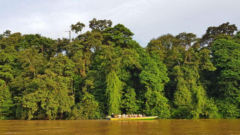 Der Kinabatangan bietet hervorragende Bootsafaris © Diamir