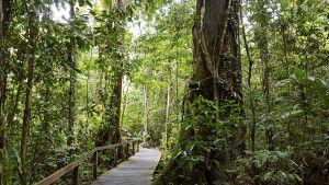 gut ausgebauter Weg im Mulu-Nationalpark