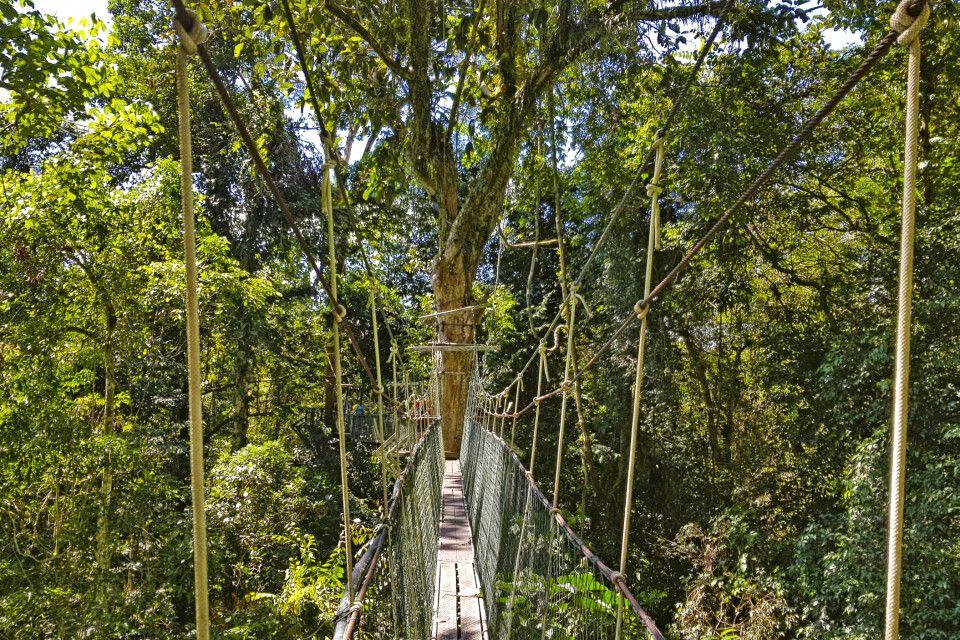 Baumwipfelpfad im Mulu-Nationalpark