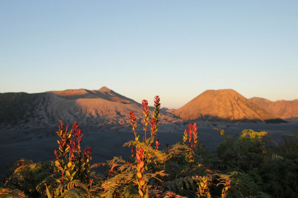 Sonnenaufgang auf dem Mt. Bromo