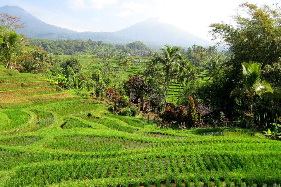 Reisterrassen von Jatiluwih