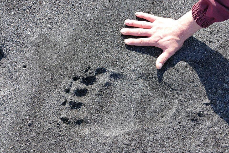 Spuren im Flussbett