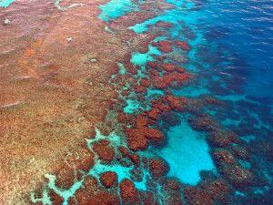 Blick auf die Korallenformationen des Great Barrier Reefs