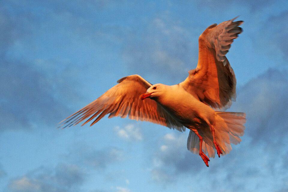 Vogelfotografie im schönsten Licht