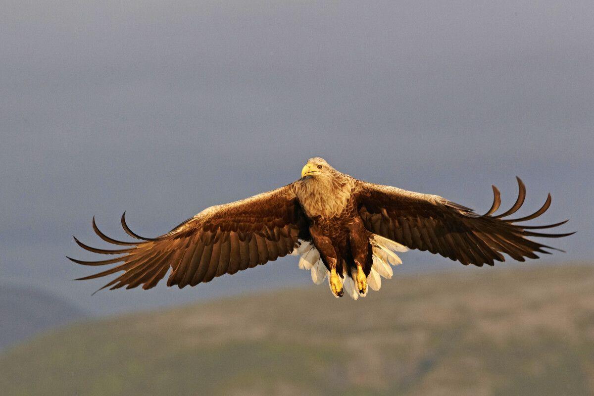 Norwegen – 6 Tage Mit Adlermann Ole Martin Dahle und Tierfotograf Michael Lohmann bei den großen Greifvögeln Nordeuropas