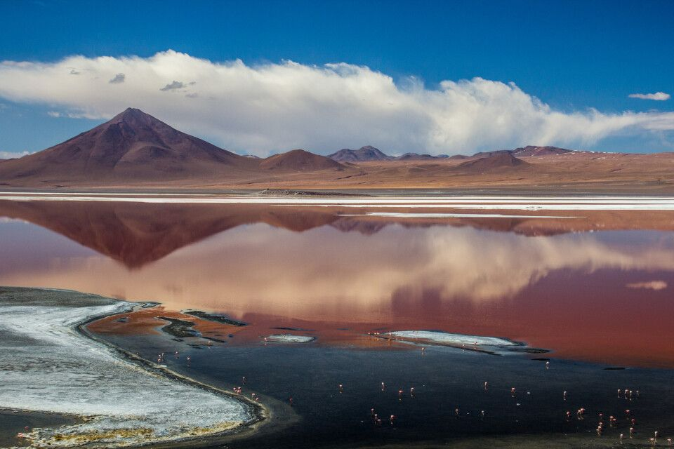 Laguna Colorada in der Atacama Wüste