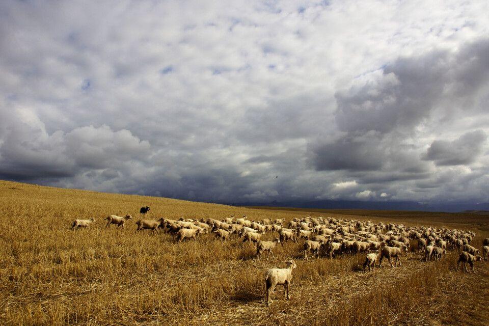 Landwirtschaft in Südafrika