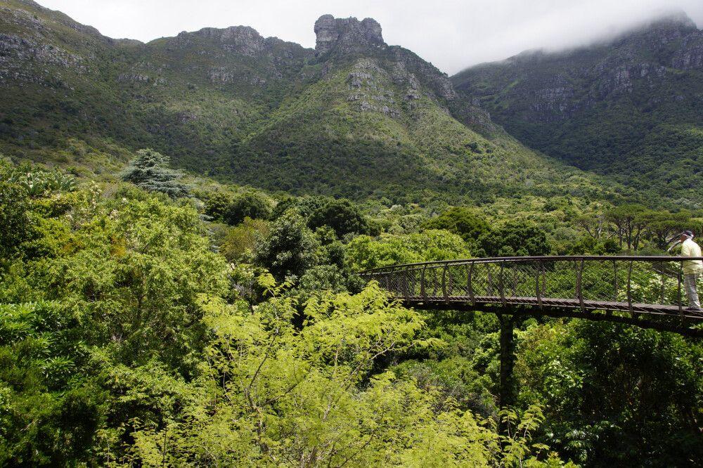 Kirstenbosch Garten