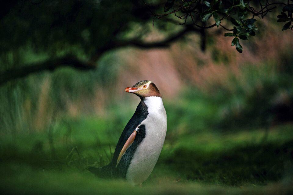Ein Pinguin im Wald