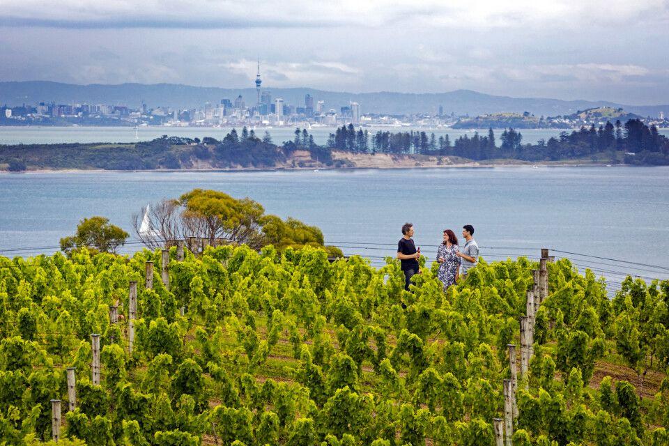 Zwischen Weinreben und mit tollem Ausblick auf Auckland