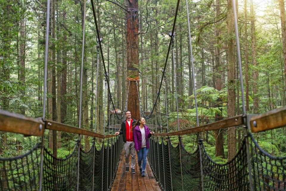 Eine Wanderung durch die Wipfel des Redwoods Forests, Rotorua