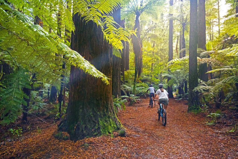 Eine Bike Tour durch die Redwoods in Rotorua