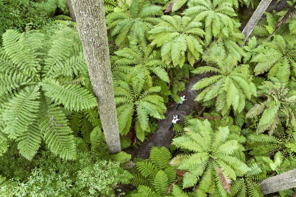 Die Redwoods in Rotorua von oben