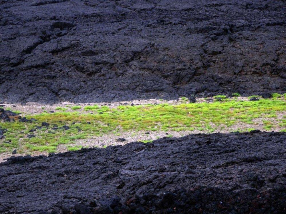 DANAKIL Reisebericht Ulrike Almer – Grün im Lavafeld