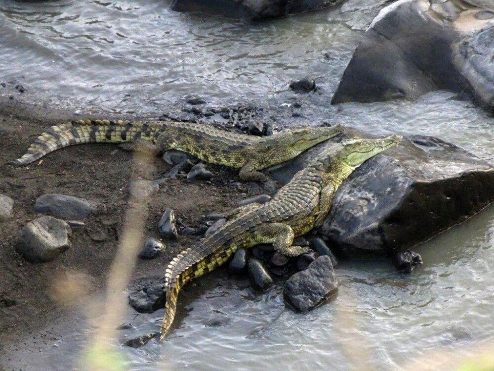 DANAKIL Reisebericht Ulrike Almer – Krokodile im Awash NP