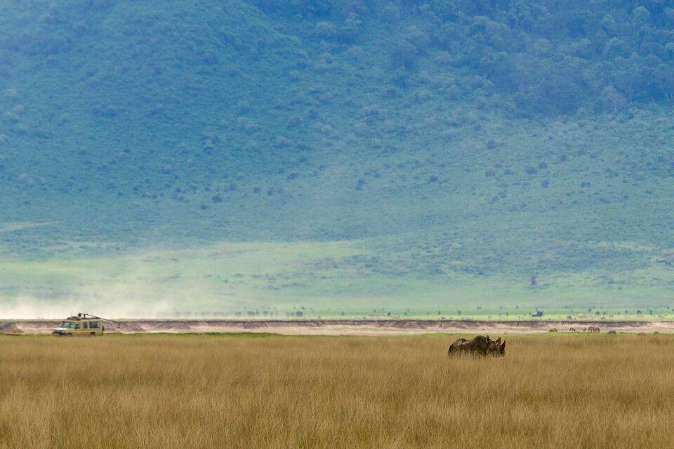 Ein Spitzmaulnashorn gibt sich die Ehre im Ngorongoro-Krater, Ta