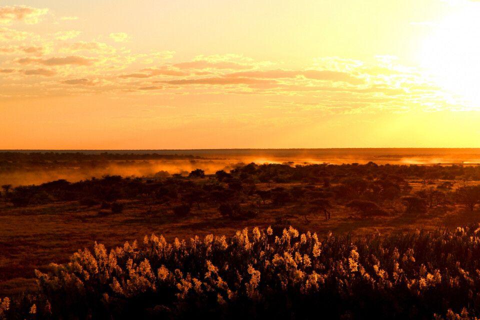 Der Tag über der afrikanischen Savanne neigt sich im Etosha-Nationalpark dem Ende entgegen.