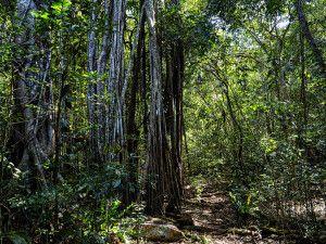 Dichter Urwald auf Neukaledonien