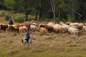 Farmer auf Neukaledonien