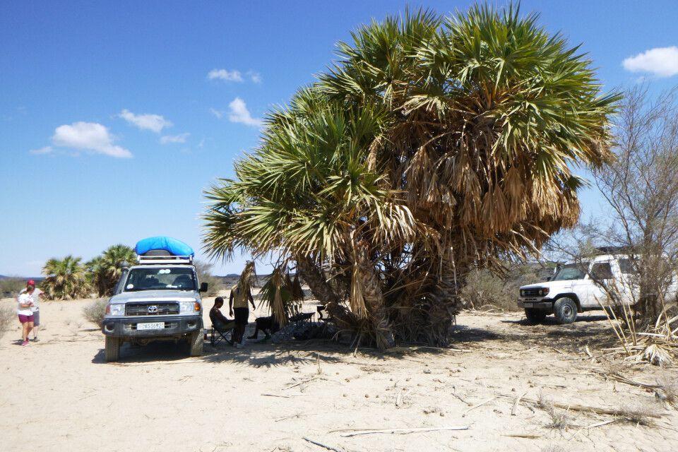 Rast im Schatten einer Palme