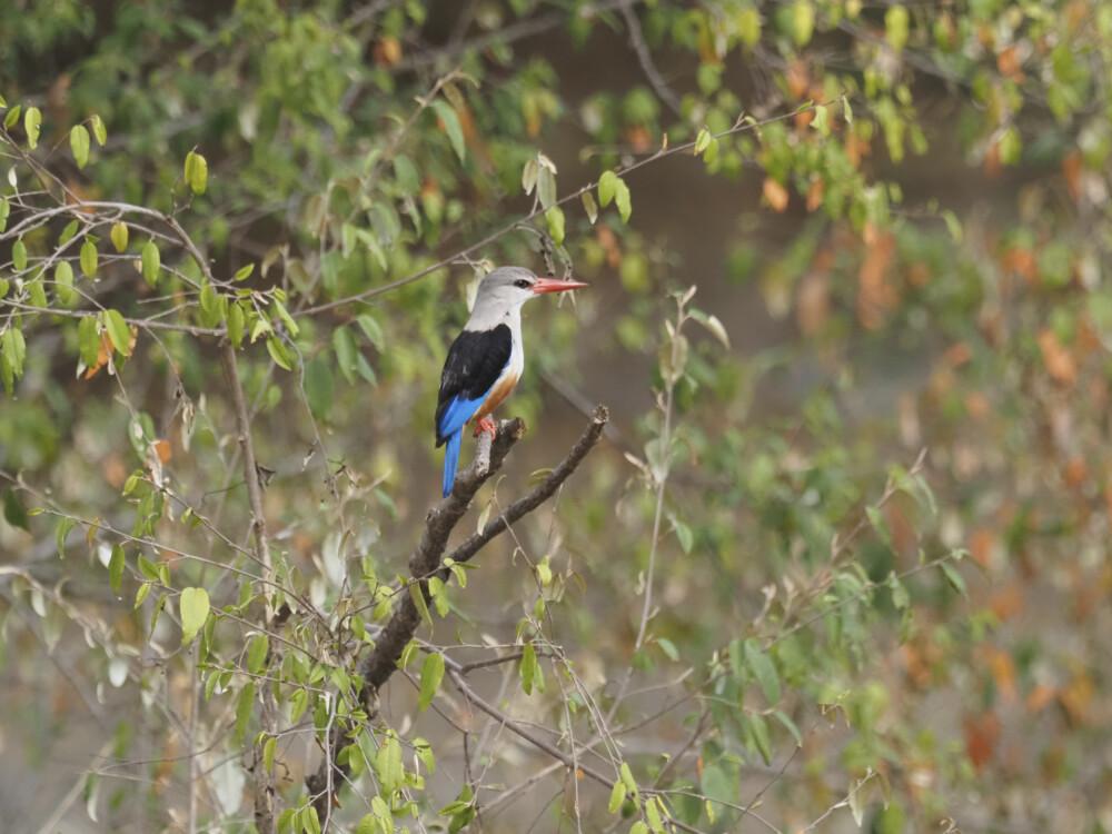 Farbenprächtige Vogelwelt Kenias