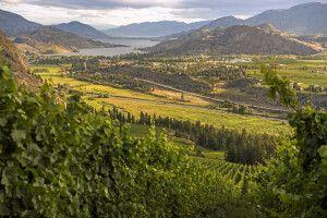 Blick auf den Skaha Lake von den Weinbergen der See Ya Later Ranch, Okanagan Falls