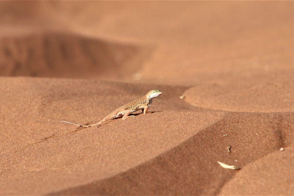 Auch hier im Sand sind Bewohner zu finden.