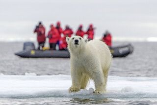 Eisbärbeobachtung
