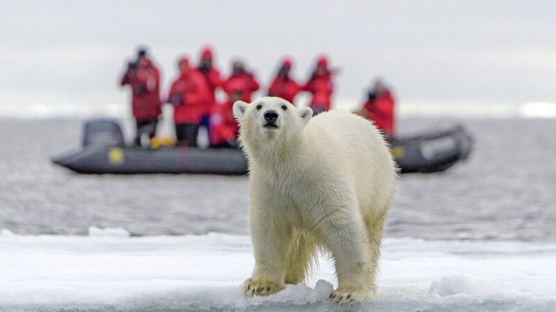 Eisbärbeobachtung © Diamir